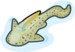 Zebra shark single