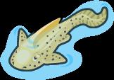 Zebra shark single
