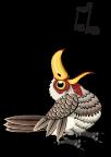 African yellow hornbill an