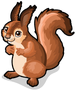 German red squirrel single