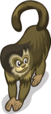 Tufted Capuchin single