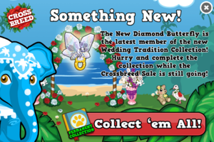 New ring butterfly modal