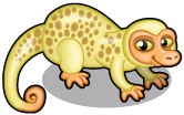 Spotted cuscus single