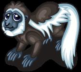 Colobus monkey single