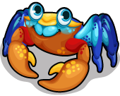 Mongrove crab single
