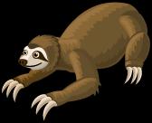 Three toed sloth single