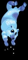 Glacier bear an