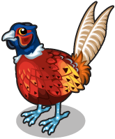 Pheasant single