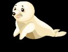 Harp seal an