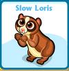 Slow loris card