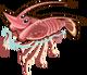 Caribbean Spiny Lobster single