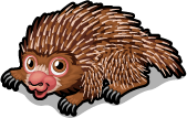 Tree porcupine single