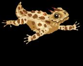 Horned lizard an