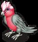Roseate cockatoo single