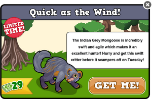 Grey mongoose modal