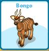 Bongo card