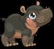 Cubby hippo single