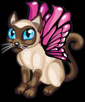 Siamese butterfly cat single