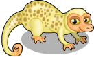 Spotted cuscus static
