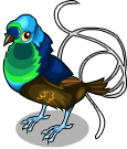 Ribbon tailed astrapia static