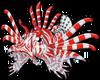 Lionfish single