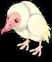 Albino Black Vulture single