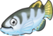 Archer fish single