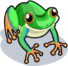 Tree Frog single