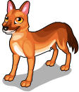 Dhole (around the world) quiet