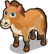 Przewalski's Horse single