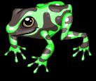 Poison arrow frog static