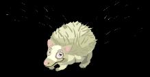 Albino hedgehog an