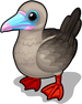 Red footed booby single