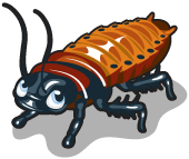 Hissing cockroach single