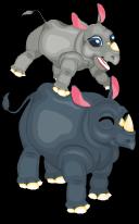 Black rhinoceros an