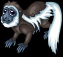 Colobus monkey static