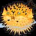 Pufferfish single