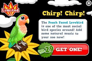 Peach faced lovebird modal