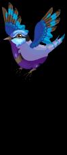 Splendid fairy wren an