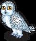 Arctic snowy owl single