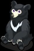 Sloth Bear single