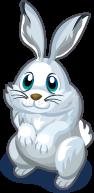 Snowshoe Hare single