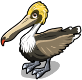 Brown pelican single
