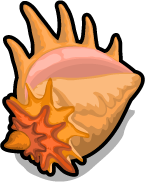 Queen conch single