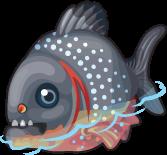 Red bellied piranha single
