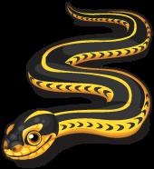 Mexican garter snake single