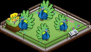 Peacock family