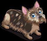 Silky Terrier single