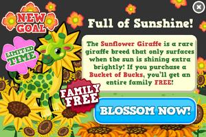 Sunflower giraffe modal