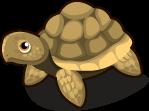 African Tortoise single